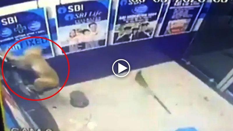 ATM ਦੇ ਅੰਦਰ ਬਾਂਦਰ ਨੇ ਮਚਾਇਆ ਕਹਿਰ, ਵਾਇਰਲ CCTV ਫੁਟੇਜ ਨੇ ਲੋਕਾਂ ਨੂੰ ਪਾਇਆ ਭੰਬਲਭੂਸੇ 'ਚ