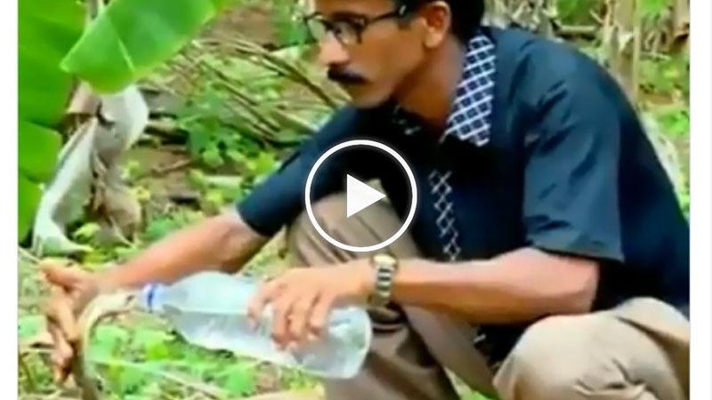 Video : ਜੰਗਲ 'ਚ ਪਿਆਸਾ ਸੀ ਕੋਬਰਾ, ਸ਼ਖਸ ਲਿਆਇਆ ਬੋਤਲ ਤਾਂ ਇੰਝ ਗੱਟ-ਗੱਟ ਪੀ ਗਿਆ ਪਾਣੀ