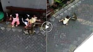 Shocking Video : ਬਾਈਕ ਲੈ ਕੇ ਗਲੀ 'ਚ ਦਾਖ਼ਲ ਹੋਇਆ ਬਾਂਦਰ, ਘੜੀਸਦਾ ਲੈ ਗਿਆ ਬੱਚੀ ਨੂੰ ਅਤੇ ਫਿਰ...