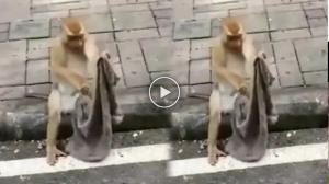 ਜਲੰਧਰ ਵਾਸੀ ਇਸ ਬਾਂਦਰ ਤੋਂ ਲੈਣ ਸਬਕ, Viral Video