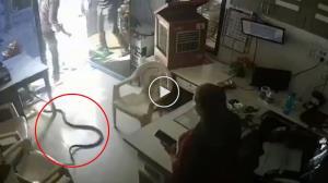 ਬੋਤਲ 'ਚ ਨਹੀਂ ਦਿੱਤਾ ਪੈਟਰੋਲ ਤਾਂ ਗੁੱਸੇ 'ਚ ਸ਼ਖਸ ਨੇ ਛੱਡੇ 3 ਜ਼ਹਿਰੀਲੇ ਸੱਪ, ਵੀਡੀਓ CCTV 'ਚ ਕੈਦ
